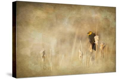 Marsh Singer-Roberta Murray-Stretched Canvas Print