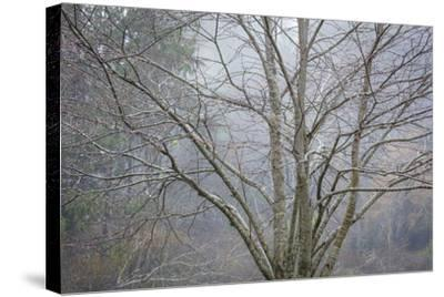 Foggy Winter I-Kathy Mahan-Stretched Canvas Print