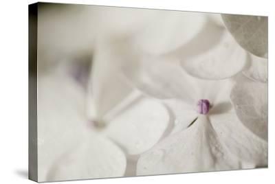 Raindrops on Petals-Roberta Murray-Stretched Canvas Print