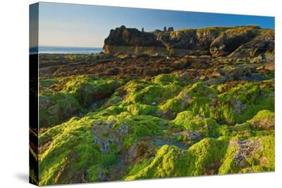 Ireland, Wicklow Coast-Thomas Ebelt-Stretched Canvas Print