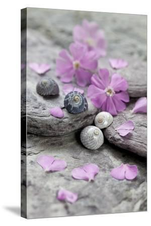 Pink Blossoms, Stone, Snail Shell-Andrea Haase-Stretched Canvas Print