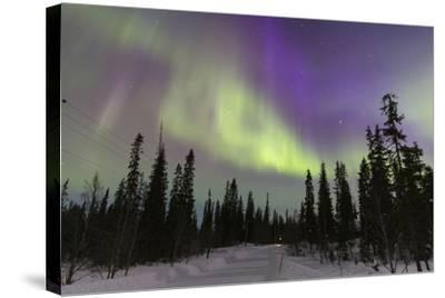 Northern Lights in Winter, Aurora Borealis, PyhŠ-Luosto National Park, Luosto, Lapland, Finland-P. Kaczynski-Stretched Canvas Print