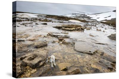 The North Atlantic, Bear Island, Mountain Landscape, Rocks, Snow, Melt Water-Frank Lukasseck-Stretched Canvas Print