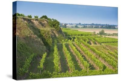 Austria, Lower Austria, Krems (River), Kremstal (Valley), Vineyards-Rainer Mirau-Stretched Canvas Print