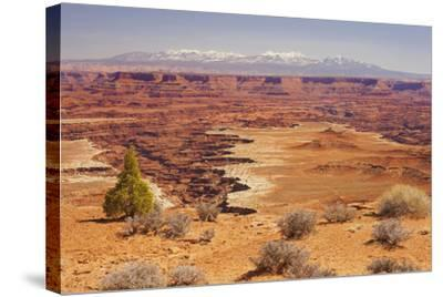 Shafer Trail Overlook, Canyonlands National Park, La Sal Mountains, Utah, Usa-Rainer Mirau-Stretched Canvas Print