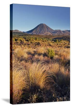 Vegetation, Mount Ngauruhoe, Tongariro National Park, Manawatu-Manganui, North Island, New Zealand-Rainer Mirau-Stretched Canvas Print
