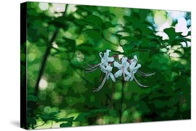 Wild Azaleas in the Mariners' Museum Park-Gregg Vicik-Stretched Canvas Print