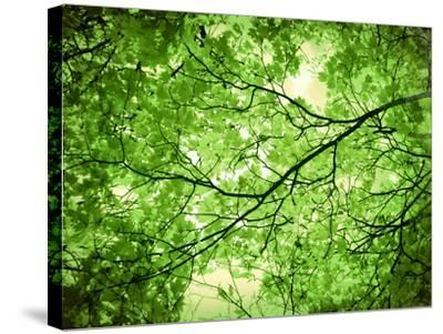 Foliage Tree, Branches, Branches, Leaves, Green-Alaya Gadeh-Stretched Canvas Print