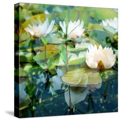 Montage of White Water Lilies-Alaya Gadeh-Stretched Canvas Print