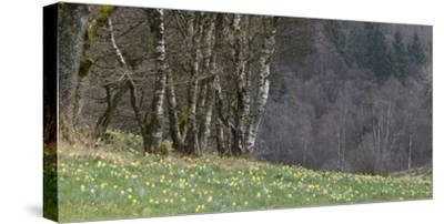 Germany, North Rhine-Westphalia, Rur Eifel (Local Recreation Area-Andreas Keil-Stretched Canvas Print