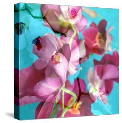 Dreamy Pink Blooming Miltonia Orchid and Phaleaonopsis Infront of Light Blue Backgound-Alaya Gadeh-Stretched Canvas Print
