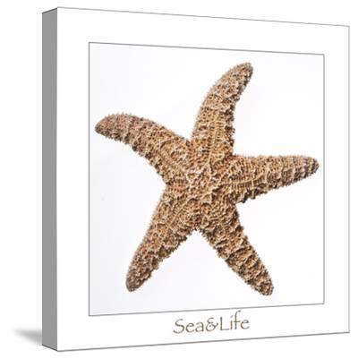 Maritime Still Life with Starfish-Uwe Merkel-Stretched Canvas Print