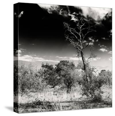 Awesome South Africa Collection Square - Savannah Trees B&W-Philippe Hugonnard-Stretched Canvas Print