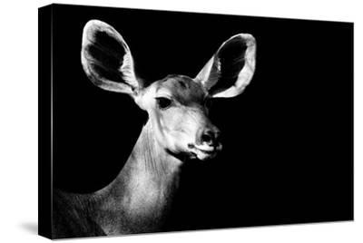 Safari Profile Collection - Antelope Impala Portrait Black Edition II-Philippe Hugonnard-Stretched Canvas Print
