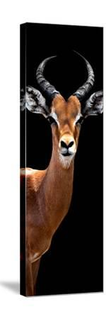 Safari Profile Collection - Antelope Black Edition IV-Philippe Hugonnard-Stretched Canvas Print