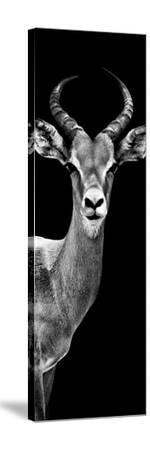 Safari Profile Collection - Antelope Black Edition III-Philippe Hugonnard-Stretched Canvas Print