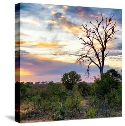 Awesome South Africa Collection Square - Sunrise in Savannah-Philippe Hugonnard-Stretched Canvas Print