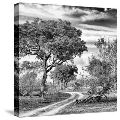 Awesome South Africa Collection Square - African Safari Road B&W-Philippe Hugonnard-Stretched Canvas Print