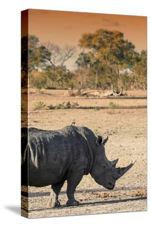 Awesome South Africa Collection - Black Rhinoceros and Savanna Landscape at Sunset I-Philippe Hugonnard-Stretched Canvas Print