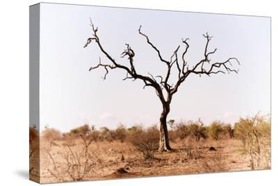 Awesome South Africa Collection - Savanna Tree IX-Philippe Hugonnard-Stretched Canvas Print