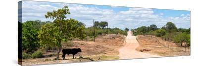 Awesome South Africa Collection Panoramic - Road in the Savannah-Philippe Hugonnard-Stretched Canvas Print