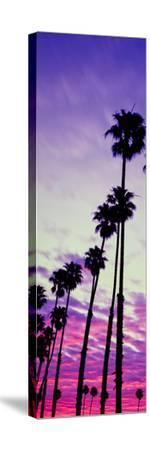 Silhouette of Palm Trees at Sunrise, Santa Barbara, California, USA--Stretched Canvas Print