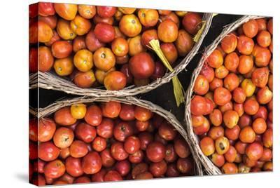 Tomatoes at Hpa an Morning Market, Kayin State (Karen State), Myanmar (Burma), Asia-Matthew Williams-Ellis-Stretched Canvas Print