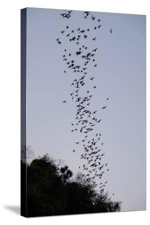 Bats Cave, Battambang, Battambang Province, Cambodia, Indochina, Southeast Asia, Asia-Nathalie Cuvelier-Stretched Canvas Print