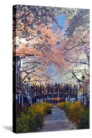 Asia, Republic of Korea, South Korea, Jinhei, Spring Cherry Blossom Festival-Christian Kober-Stretched Canvas Print