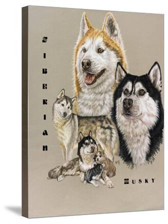 Siberian Husky-Barbara Keith-Stretched Canvas Print