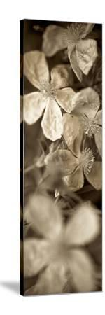 Florison 69-Alan Blaustein-Stretched Canvas Print