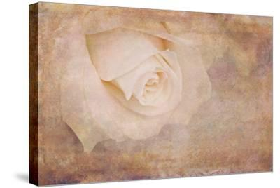 Vintage Rose Card-Cora Niele-Stretched Canvas Print