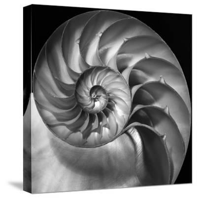 Nautilus 2-Moises Levy-Stretched Canvas Print