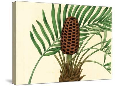Palmetto III-Zachary Alexander-Stretched Canvas Print