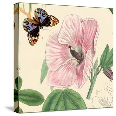 Hibiscus-Louis Van Houtte-Stretched Canvas Print