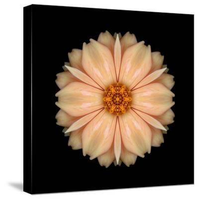 Kaleidoscope Peach Dahlia-David Bookbinder-Stretched Canvas Print