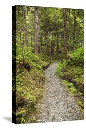 Path Inside Tongass National Forest-Macduff Everton-Stretched Canvas Print
