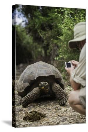 Tourist Photographing a Captive Galapagos Tortoise at the Charles Darwin Research Station-Jad Davenport-Stretched Canvas Print