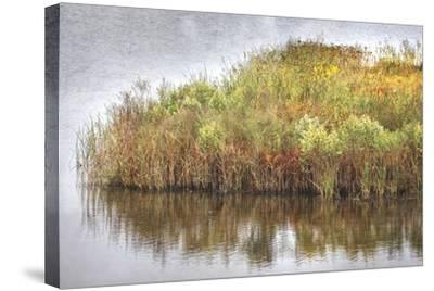 Marsh 2-Lillis Werder-Stretched Canvas Print