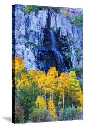 Autumn Color Waterfall Bishop Creek Canyon Eastern Sierras California-Vincent James-Stretched Canvas Print