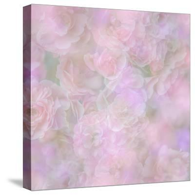 English Rose II-Doug Chinnery-Stretched Canvas Print