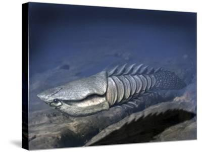 Anglaspis Is a Heterostracan from the Early Devonian of Norway-Stocktrek Images-Stretched Canvas Print