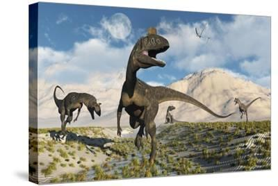 Cryolophosaurus Dinosaurs Roaming During the Jurassic Period-Stocktrek Images-Stretched Canvas Print