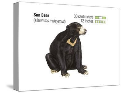 Sun Bear (Helarctos Malayanus), Mammals-Encyclopaedia Britannica-Stretched Canvas Print