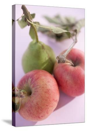 Pear and Two Apples with Stalks and Leaves (Overhead View)-Foodcollection-Stretched Canvas Print
