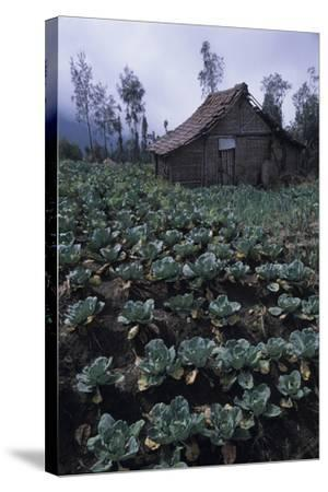 Farm Building In Bromo-Tengger-Semeru National Park, Java, Indonesia-Daniel Gomez-Stretched Canvas Print
