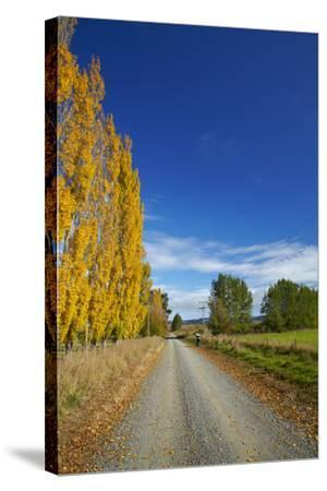 Poplar Trees in Autumn and Road, Near Lovells Flat, South Otago, South Island, New Zealand-David Wall-Stretched Canvas Print