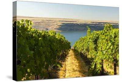 Washington State, Tri-Cities. the Benches Vineyards-Richard Duval-Stretched Canvas Print