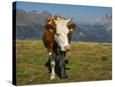 Switzerland, Bern Canton, Mannlichen Area, Swiss Cow in Alpine Setting-Jamie And Judy Wild-Stretched Canvas Print