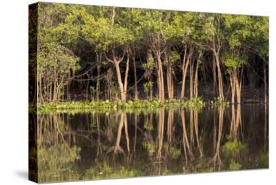 Brazil, Mato Grosso, the Pantanal, Rio Negro. Trees Along the Rio Negro-Ellen Goff-Stretched Canvas Print
